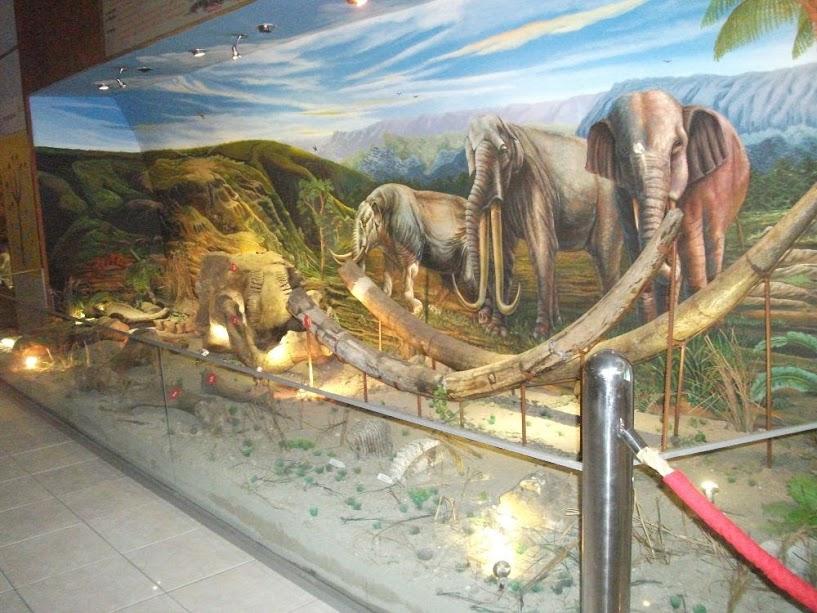 Gajah purba yang diperkirakan hidup di sekitar Jawa Tengah