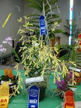 Photo: Renanthera citrina ' Ori Gem' - Phượng Vỹ Vàng