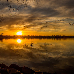geese flying at sunset by Eric Wellman - Landscapes Sunsets & Sunrises ( sunset, lake, geese,  )