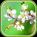 Spring Garden Live Wallpaper icon