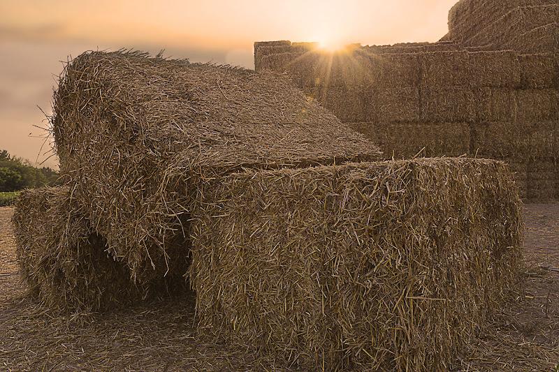 Campo agricolo di Fabio De Vita