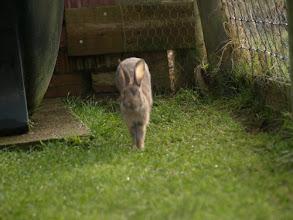 Photo: Bunny