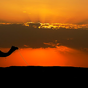 Sunset in sand dunes by Dola Das - Landscapes Deserts ( nature, sunset, travel, landscape, animal, , silhouette )