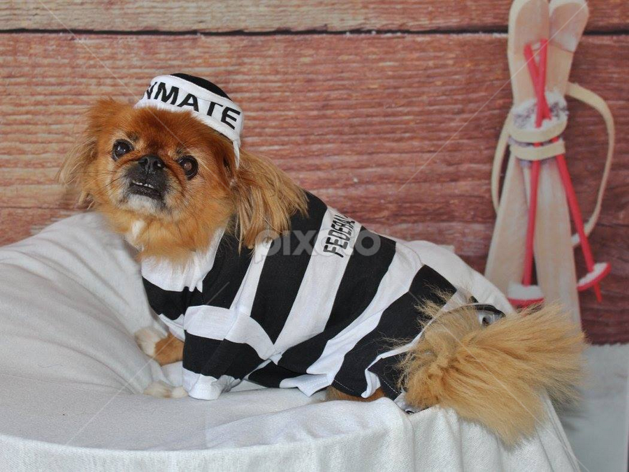 Pooch in Prison by Terry Linton - Animals - Dogs Portraits (  )