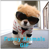 GIF Funny Animal Collection