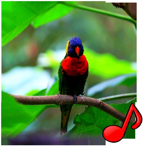 Birds Video Wallpaper Pro