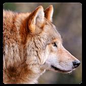 Wolves Sounds & Ringtone