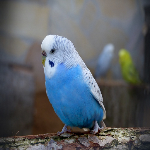 Pet Budgie Information And Care – Apps on Google Play
