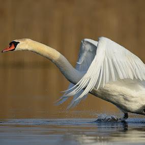 by Bostjan Pulko - Animals Birds