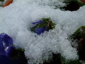 Photo: La forza della vita e dell'amore fa sciogliere il gelo!