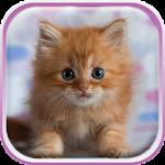 Cute Kittens Live Wallpaper