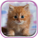 Cute Kittens Live Wallpaper icon
