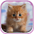 Cute Kittens Live Wallpaper file APK for Gaming PC/PS3/PS4 Smart TV