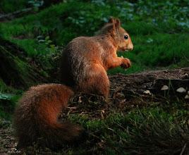 Photo: Fauna Eenkhoorn Foto: Dick Dordrecht.