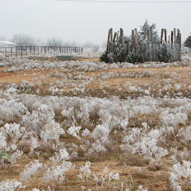 Back Pasture in Ice by Eva Ryan - Landscapes Weather ( winter, ice, weeds, oklahoma, fence, pasture, landscape,  )