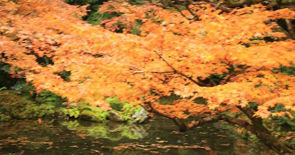42. Nanzen-in (100 Japanese Garden in Kyoto I recommend )