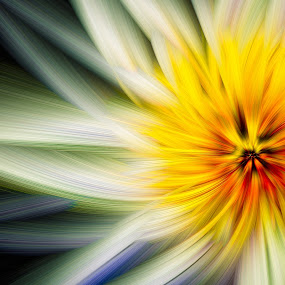 Flower Twirl 1 by Tim Nichols - Digital Art Things ( abstract, yellow, twirl, flower, photoshop )