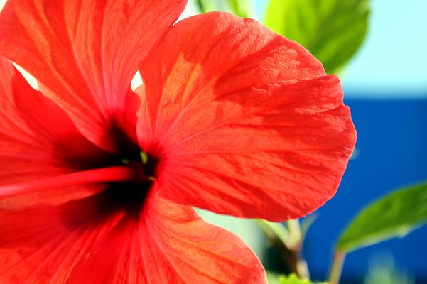 Flower di Laura Molinaro