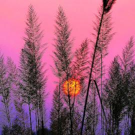 Sunset by Praveen Kulshreshtha - Landscapes Sunsets & Sunrises