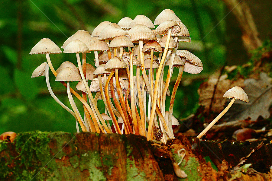 Regroupement by Gérard CHATENET - Nature Up Close Mushrooms & Fungi (  )