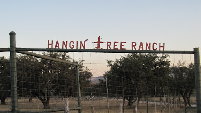 """Photo: ...Just down the road to another Famous Tree, the """"Hangman's Oak."""""""