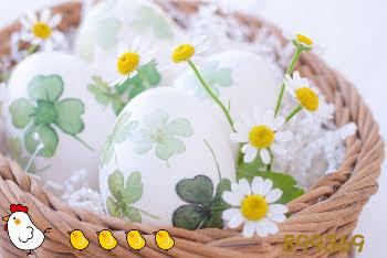 籠の中の卵と花899369