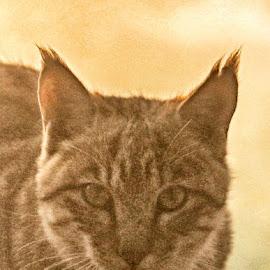 by Deep Ocean - Animals - Cats Portraits (  )