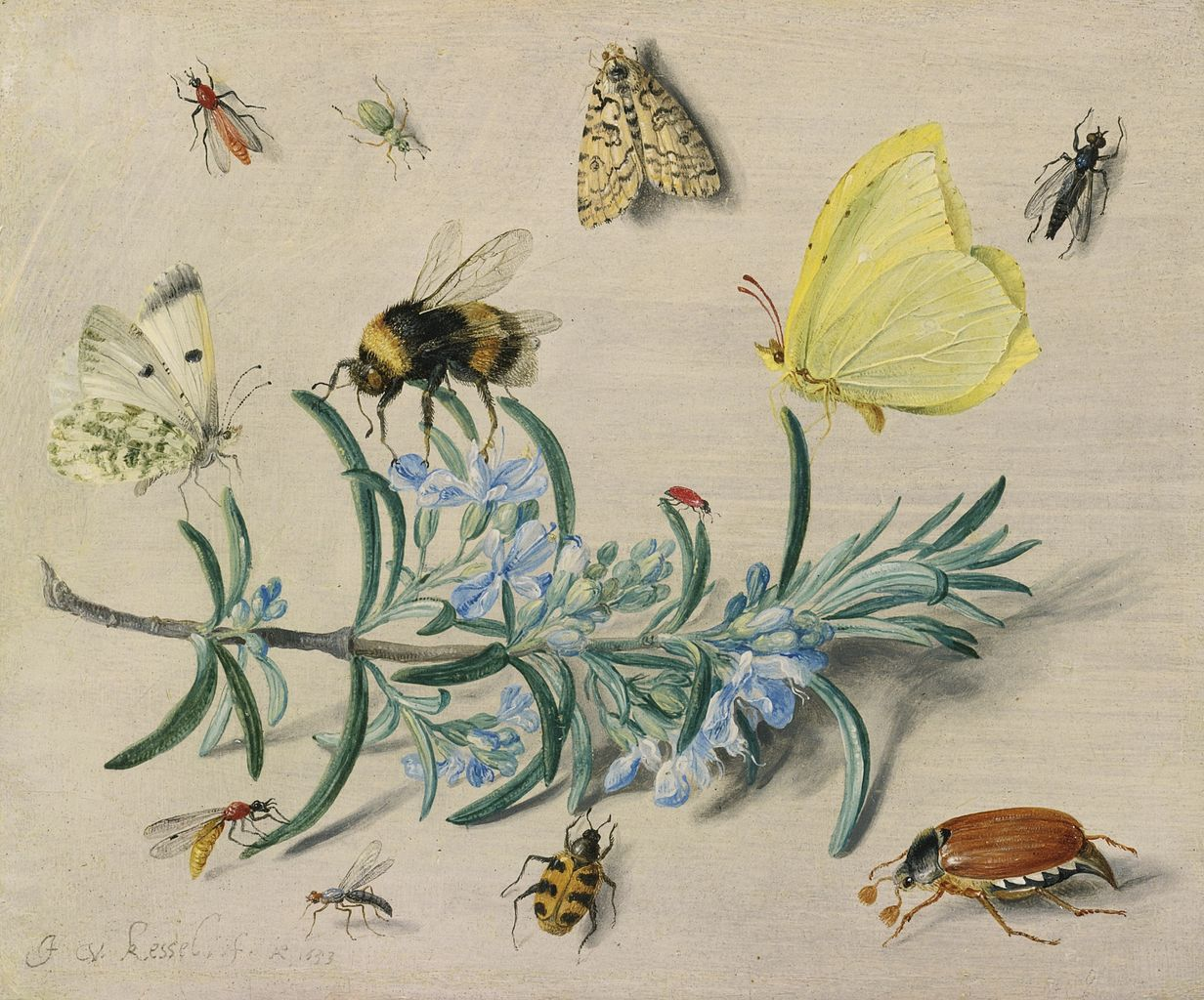File:Jan van Kessel (I) - A still life study of insects on a sprig ...