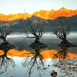 Willows of Glenorchy by Jomy Jose - Landscapes Waterscapes ( queenstown, hannahsdreamz, those willows, willows of glenorchy, jomy jose, glenorchy, new zealand )