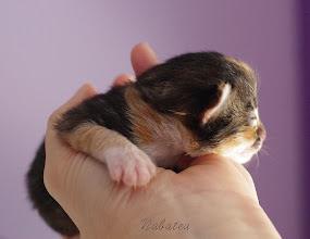 Photo: Aglaïs - 7 days old