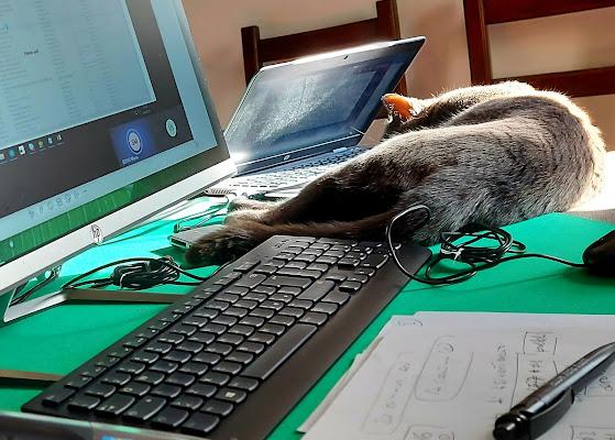 Smartworking com gattoprogrammatore. di terazuc