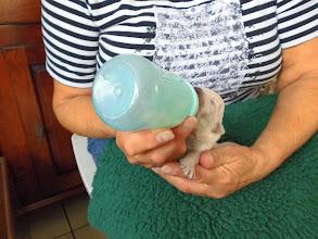 Photo: 4 oktober: de kleinsten krijgen een flesje erbij