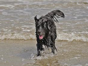 Photo: puh, die große Welle hat Bonny einfach umgeworfen