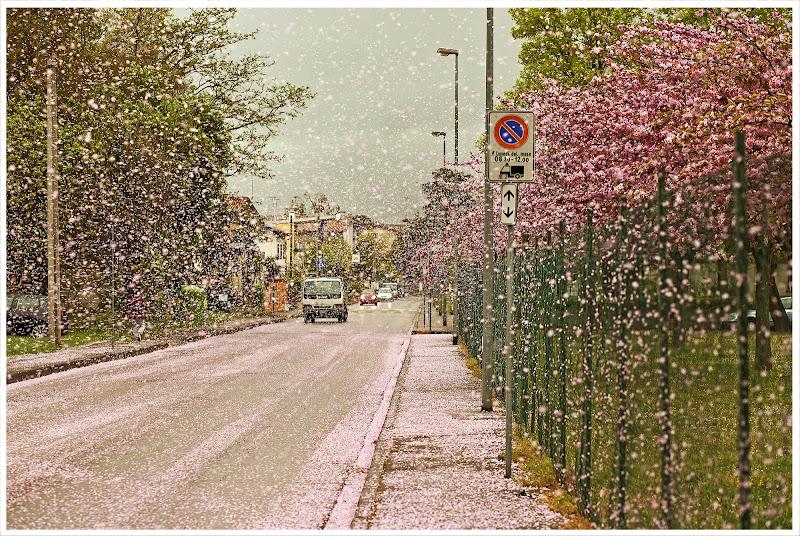 nevicata rosa di maury168