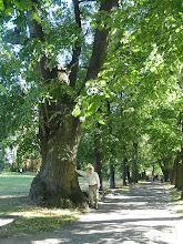 Photo: D9080235 Lancut - park i okolice