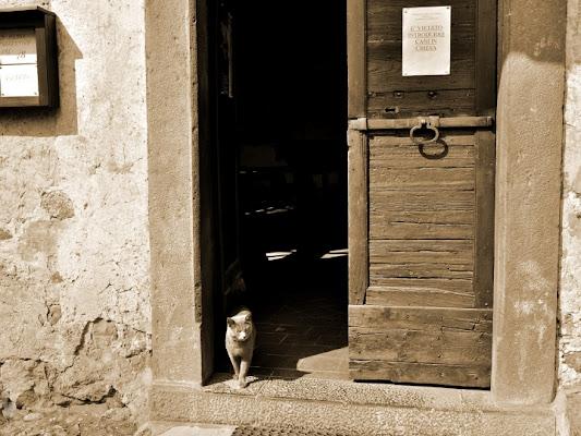 Gatto In Regola di photofabi77