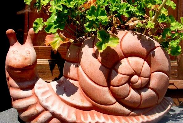 Un insolito vaso. di BananaJoe
