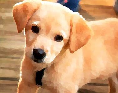 Paintlogue Watercolor Painter v2.0