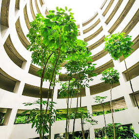 Green garden in car park building,between spiral ramp by Tanawat Pontchour - Buildings & Architecture Other Interior ( oxygen, automobile, shrub, leaf, architecture, circle, leaves, blossom, attraction, modern, nature, tree, fresh, drive, light, construction, pwcpaths, building, green, beautiful, bloom, spiral, sunlight, ramp, environment, car park, architectural, air, garden )