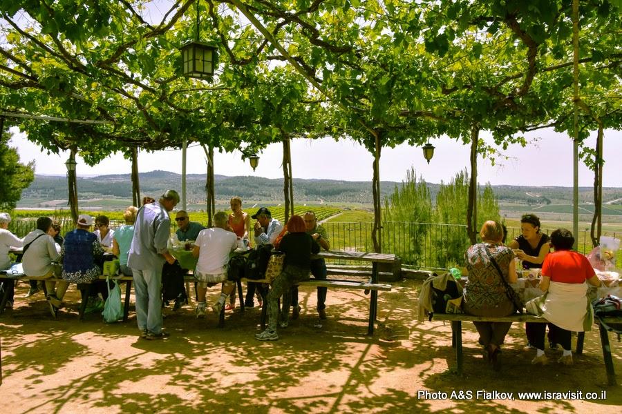 Экскурсия в Израиле. Обед на террасе винодельни Мони.