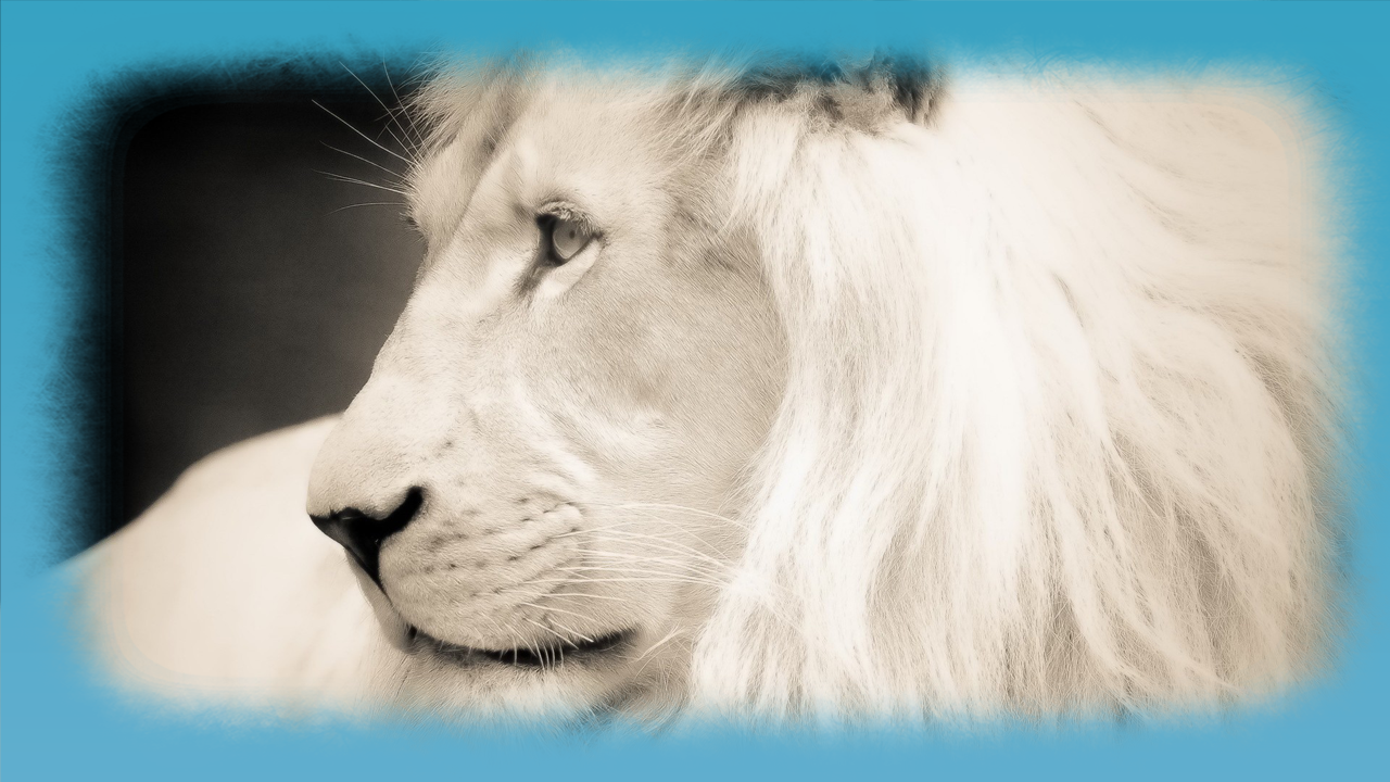 white lion hd wallpaper   android apps on google play
