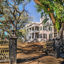 Stanton Hall by John Larson - Buildings & Architecture Homes ( fence, home, old, driveway, trees, antebellum, gate )