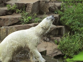 Photo: Knut in gespannter Erwartung ;-)
