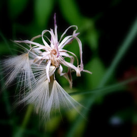Wild plant by Gil Reis - Nature Up Close Other plants ( macro, nature, plants, bio, life )
