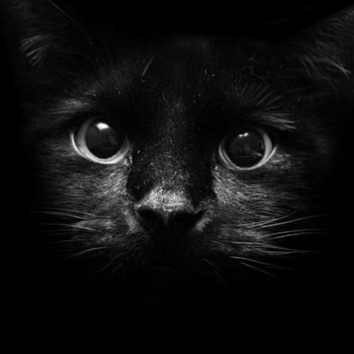 發現貓模擬器 模擬 App LOGO-APP試玩