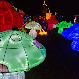 Lantern Festival 11 by Harvey Lindenbaum - City,  Street & Park  Night ( chinese lantern festival, night )