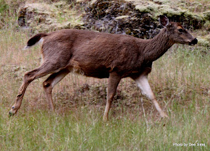 Photo: (Year 2) Day 335 - The Doe