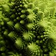 Bông cải xanh Romanesco