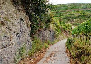 Photo: Der Wein und sein fruchtbarer vulkanischer Untergrund: Tuff am Rande eines Wirtschaftsweges.