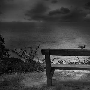 ravens night .jpg